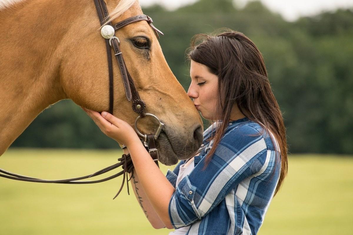 Szkółka jeździecka, szkółce nie równa… jaką wybrać, by nie wspierać tej, w której zwierzęta cierpią?