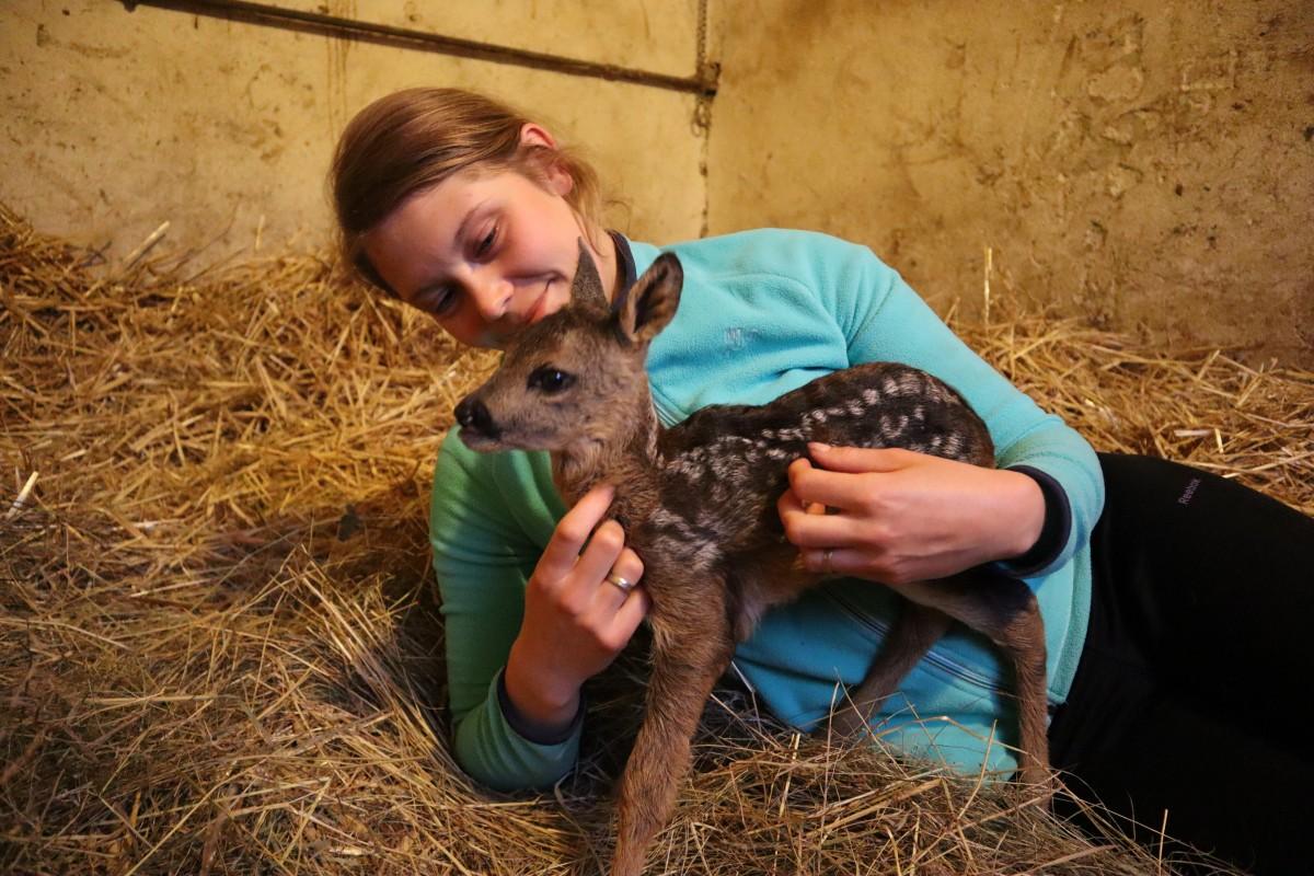 Czy powinniśmy pomagać zwierzęcym maluchom, które znaleźliśmy gdzieś w terenie bez opieki matki? Nie!!! Dotyk skazuje na śmierć i nie jest to przesadzone stwierdzenie🖤.