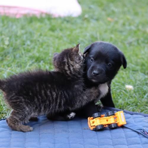 Żyć jak pies z kotem, czyli po przyjacielsku!