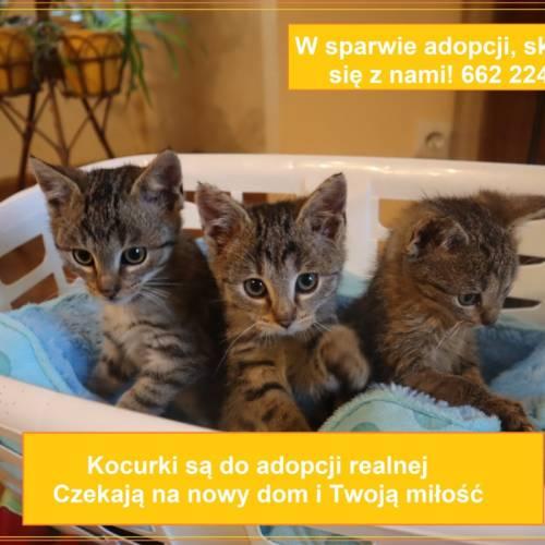 Kociaki do adopcji!