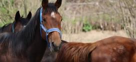 Zabawa naszych końskich dzieci w strumyku…