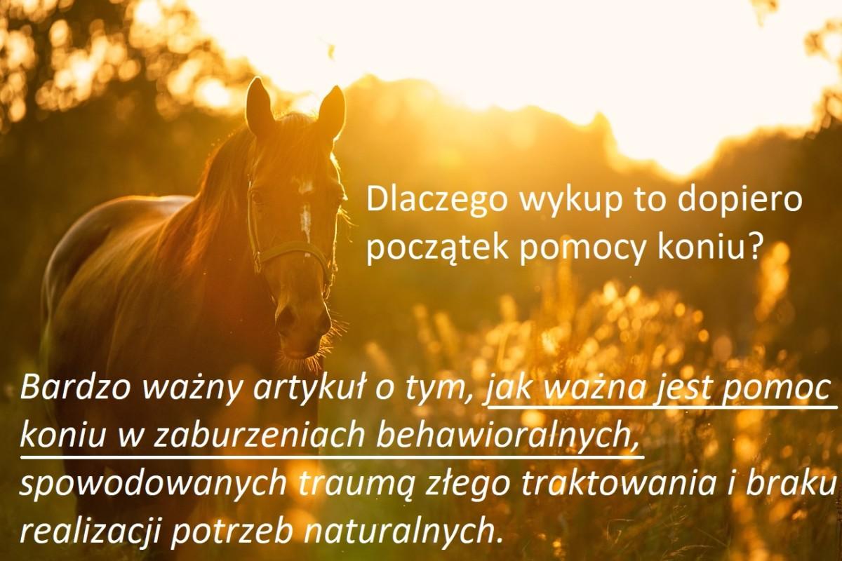 Problemy behawioralne koni- dlaczego jesteśmy innowacyjni a nasze działanie tak ważne dla prawdziwej pomocy zwierzętom?