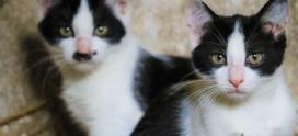 Dziękujemy za pomoc małym kotkom i ich mamie! Kotki są już do adopcji realnej…