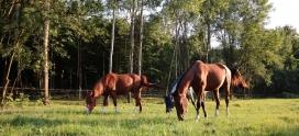 Praca z młodymi końmi- pierwszy teren Jemiołki i Karola