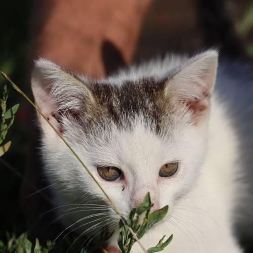 Dziękujemy za pomoc kociej rodzinie- kotki są już do adopcji relanej!